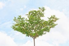 Free Tree On Blue Sky Royalty Free Stock Photography - 28522907