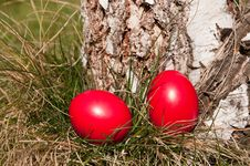 Free Easter Hunt Stock Photos - 28526763
