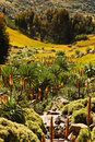Free Valley In Ethiopia. Stock Photography - 28537912