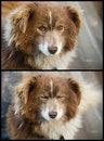 Free Poor Old Dog Stock Image - 28539961