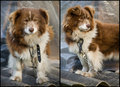Free Poor Old Dog Stock Photography - 28539962
