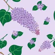 Free Lilac Bush Stock Image - 28539651