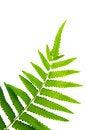 Free Fern Leaf Royalty Free Stock Photo - 28547645