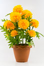 Free Flower. Royalty Free Stock Images - 28547649