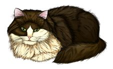 Beautiful, Large And Fluffy Cat. Royalty Free Stock Photography