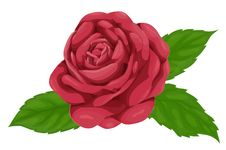 Beautiful Pink Rose With Leaves Isolated On White Background, Imitation Of Watercolors