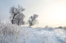 Free Winter Day Royalty Free Stock Image - 28545806