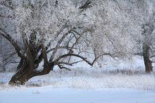 Free Winter Day Stock Photos - 28547493