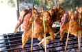 Free Thai Roasting Chicken Royalty Free Stock Photography - 28550707