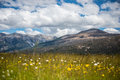 Free Beautiful Mountain And Flowers, Summer In New Zealand. Stock Photography - 28551202
