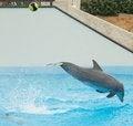 Free Dolphin Kicking Ball Royalty Free Stock Photo - 28554005
