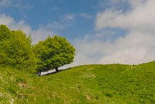 Free Perfect Leaning Tree On The Mountains Stock Photos - 28550623