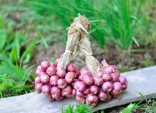 Free Group Of Shallots Royalty Free Stock Photography - 28562337