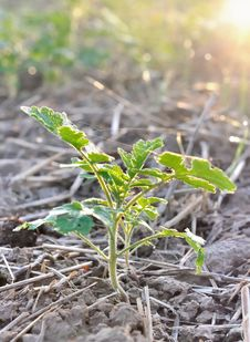 Free Growth Of A Seedlings Stock Photos - 28564973