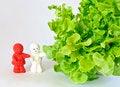 Free Ceramic Dolls With Green Oak Leaf Lettuce Stock Images - 28570694