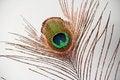 Free Peacock Feather Eye Stock Photos - 28574763