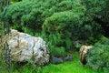 Free Bonsai Garden Royalty Free Stock Images - 28576919