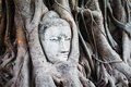 Free The Head Of Buddha In Wat Mahathat Stock Photos - 28579183
