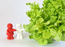 Free Ceramic Dolls With Green Oak Leaf Lettuce Stock Images - 28570694
