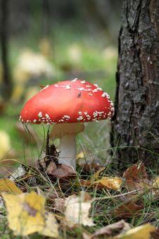 Free Mushrooms Stock Photos - 28572173