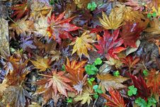 Free Autumn Leaves Royalty Free Stock Photography - 28572427