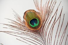 Free Peacock Feather Eye Stock Photos - 28574763