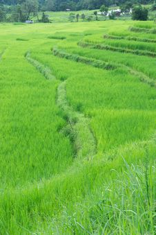 Green Terraced Rice Field Of Thailand Stock Image