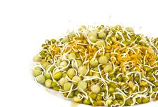 Sprouted Seeds Stock Photos