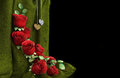 Free Isolate Holiday Background With Roses Stock Photo - 28593540