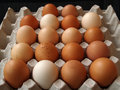 Free Farm Eggs - Variety Of Colors Royalty Free Stock Image - 28595506