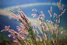 Free Flower Grass Impact Sunlight Stock Photography - 28593002