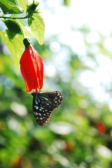 Free Butterfly On The Beautiful Bud Stock Photos - 28596933
