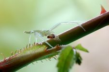 Free Green Spider Stock Photos - 28597943