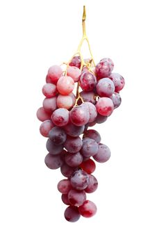 Free Tasty Bunch Of Red Grapes, Isolated Royalty Free Stock Photography - 28598837
