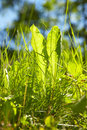 Free Grass In Summer Stock Photos - 2864233