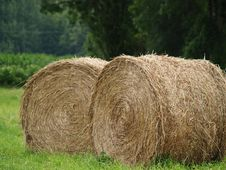 Free Hay For Two Royalty Free Stock Photos - 2862718