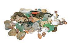 Free Sea Shells Royalty Free Stock Photos - 2862838