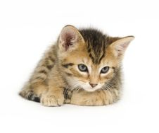 Free Tabby Kitten Resting Stock Photos - 2863223