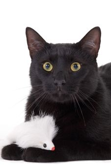 Free Black Cat & White Mouse Stock Image - 2863331