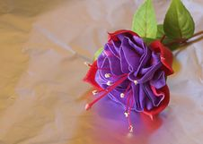 Free Fuchsia Flower Stock Photography - 2863342