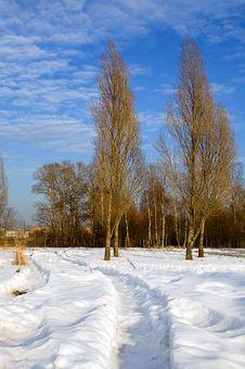 Free Winter, Snow, Pathway, Poplars Stock Photo - 2863910