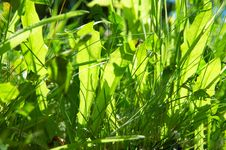 Free Grass Stock Photos - 2864263