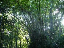 Free Bundles Of Bamboo Stock Images - 2866944