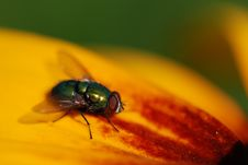 Free The Green Fly Stock Images - 2867774