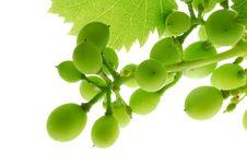Free Grapes Stock Photo - 2868060