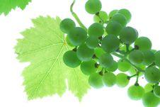 Free Grapes Stock Image - 2868631