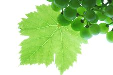 Free Grapes Royalty Free Stock Images - 2868709