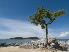 Free Tree On The Beach Stock Photo - 2868710