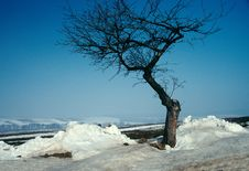 Free A Solitery Tree In The Frost. Royalty Free Stock Images - 2869449