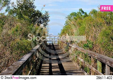 Free Dense Boardwalk Stock Photography - 28611402